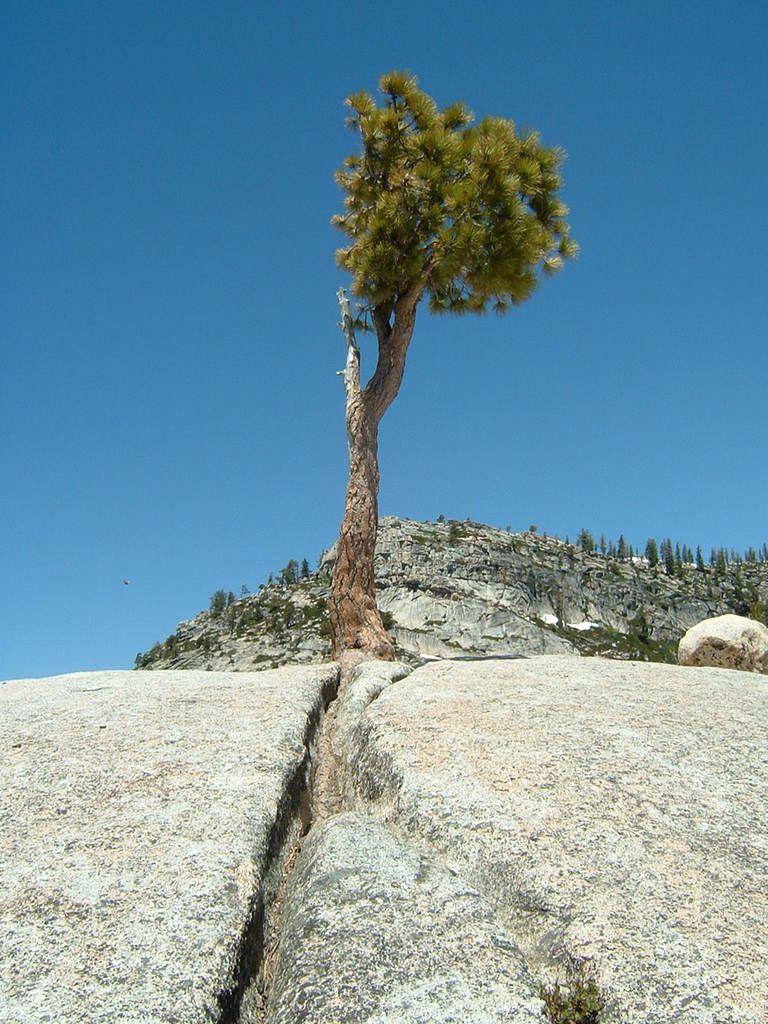 Es ist erstaunlich, wie die Natur ihre Nische findet, z.B. ein Baum, der sich mit seinen Wurzeln in einer kleinen Spalte eines riesigen Felsen festkrallt.