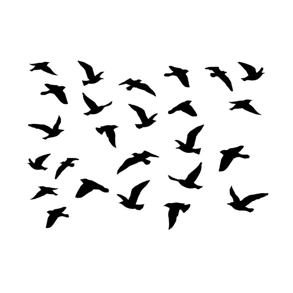 CI-478  A Flock of Birds