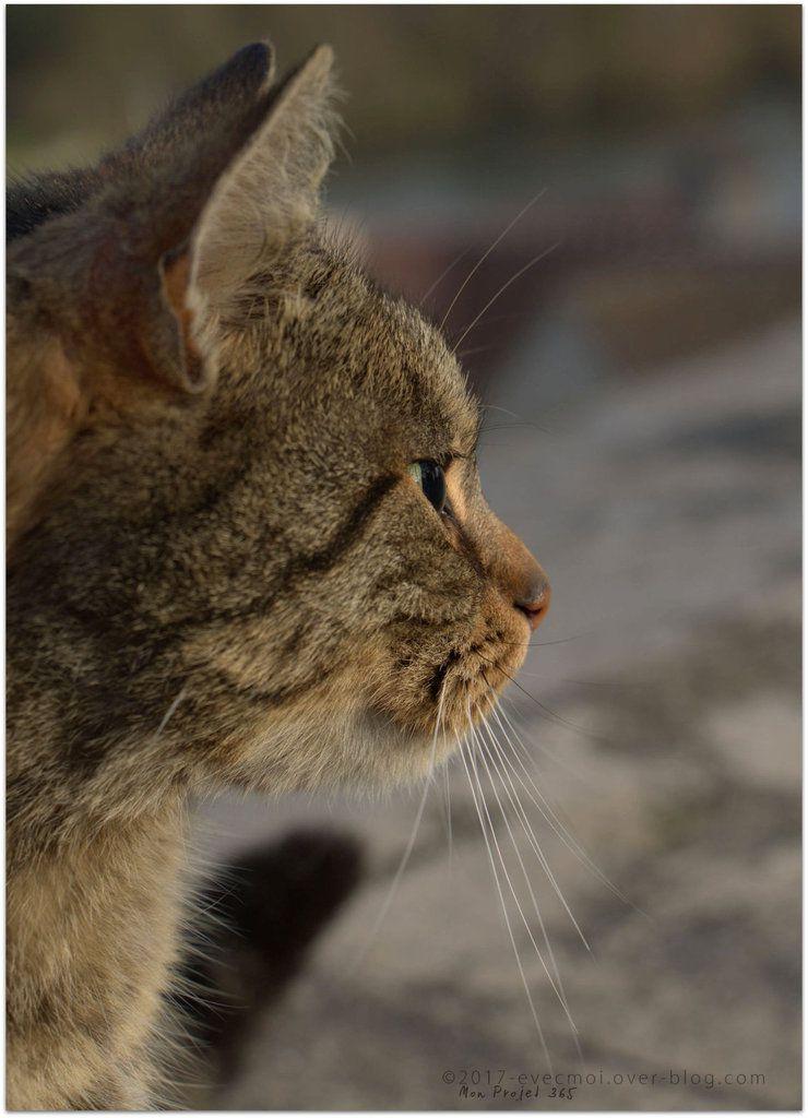 #Projet365 - Jour 47 - &quot&#x3B;Animal&quot&#x3B;