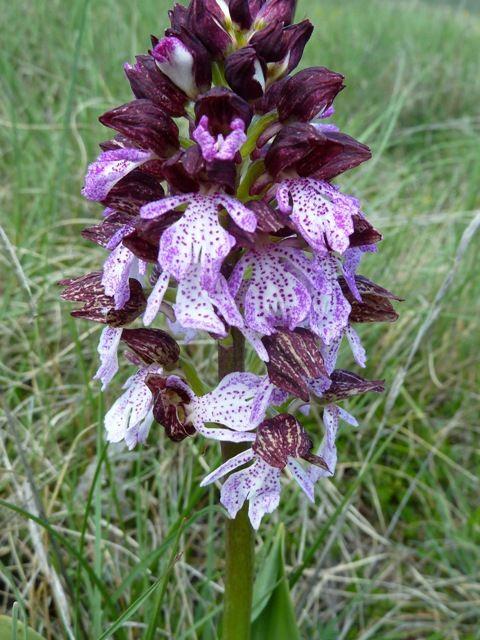Flore d'Eyroles