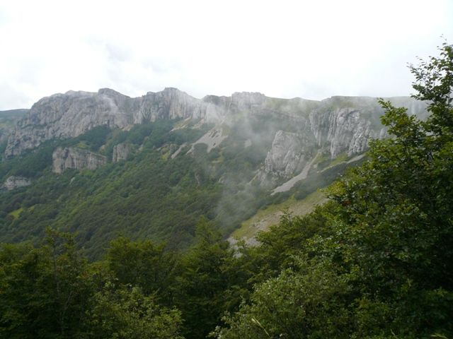 Flore du plateau d'Ambel