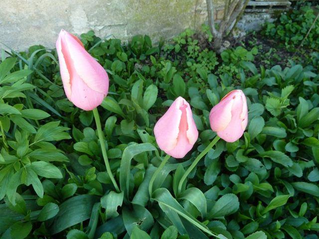 Avril en Drôme