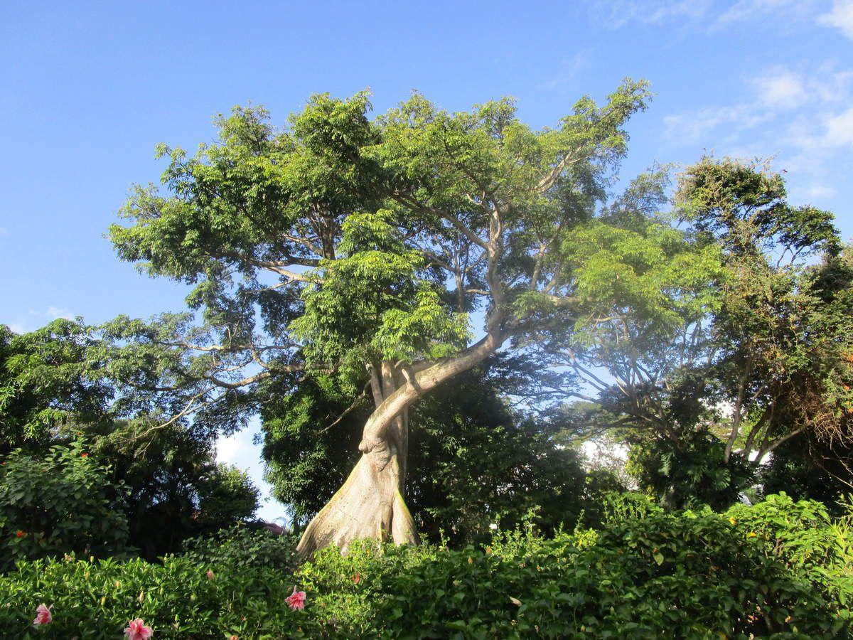 4 le jardin botanique et les amis voyage en asie du for Boulevard du jardin botanique 20