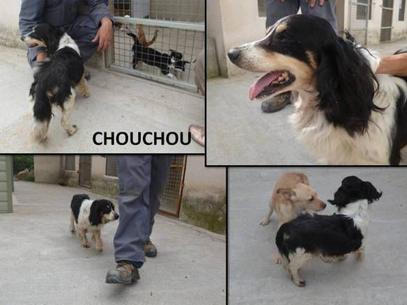 Chouchou chien de fourriere