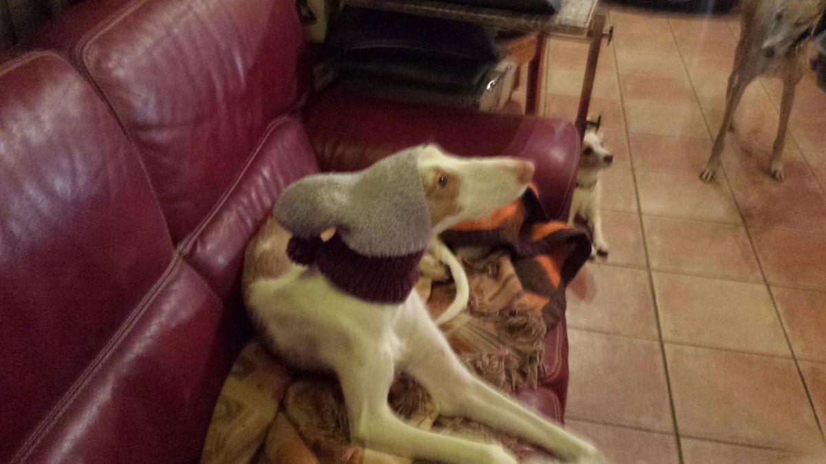 Imperméables, snoods, manteaux pour les chiens