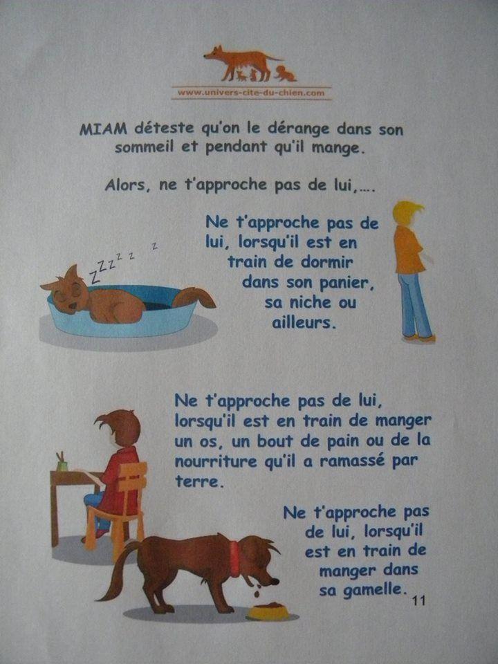 chose a ne pas faire avec un chien
