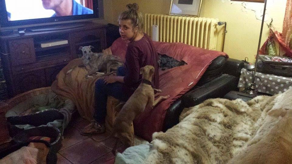 """whippet male de 12a à l'adoption a l'adoption chez """"sos chiens galgos"""""""