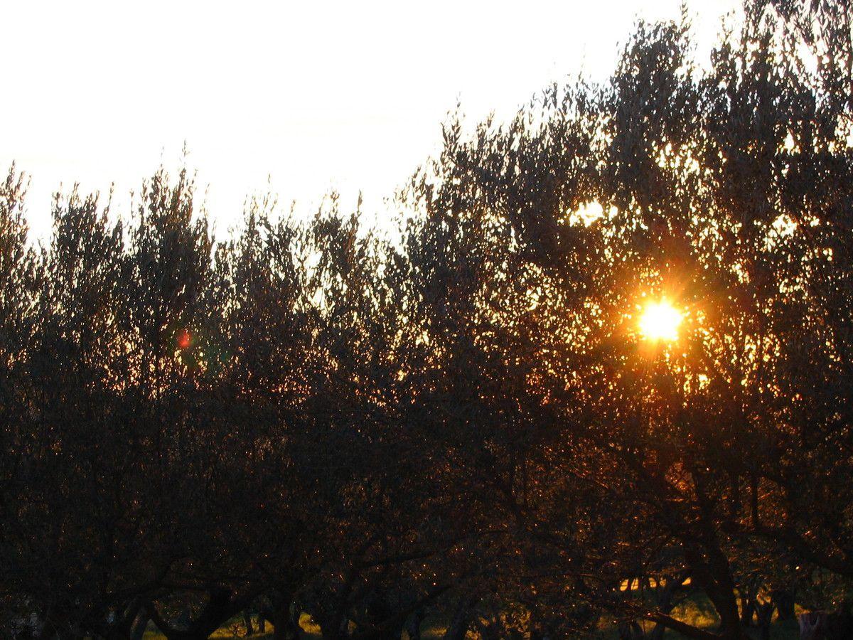 Le temps aujourd'hui 08h10 juste 1,6° maisle soleil arrive, il est un peu gêné par les oliviers, mais bon.......on s'attend à 18° cet aprem