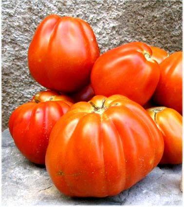 La tomate coeur de boeuf plus que bio