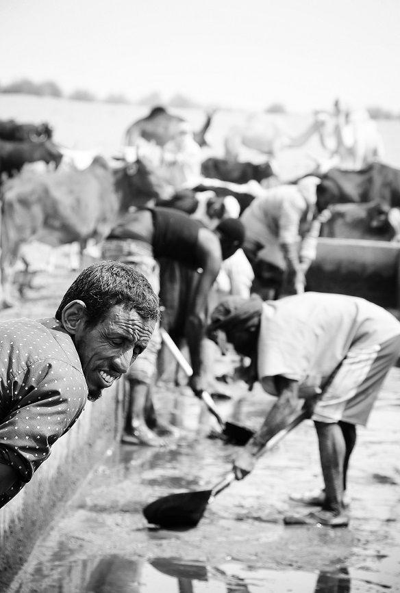 Près de Bassiknou, les bergers nettoient les abreuvoirs des bétails avant usage, la soudure approchant. Crédit : Mozaikrim/MLK