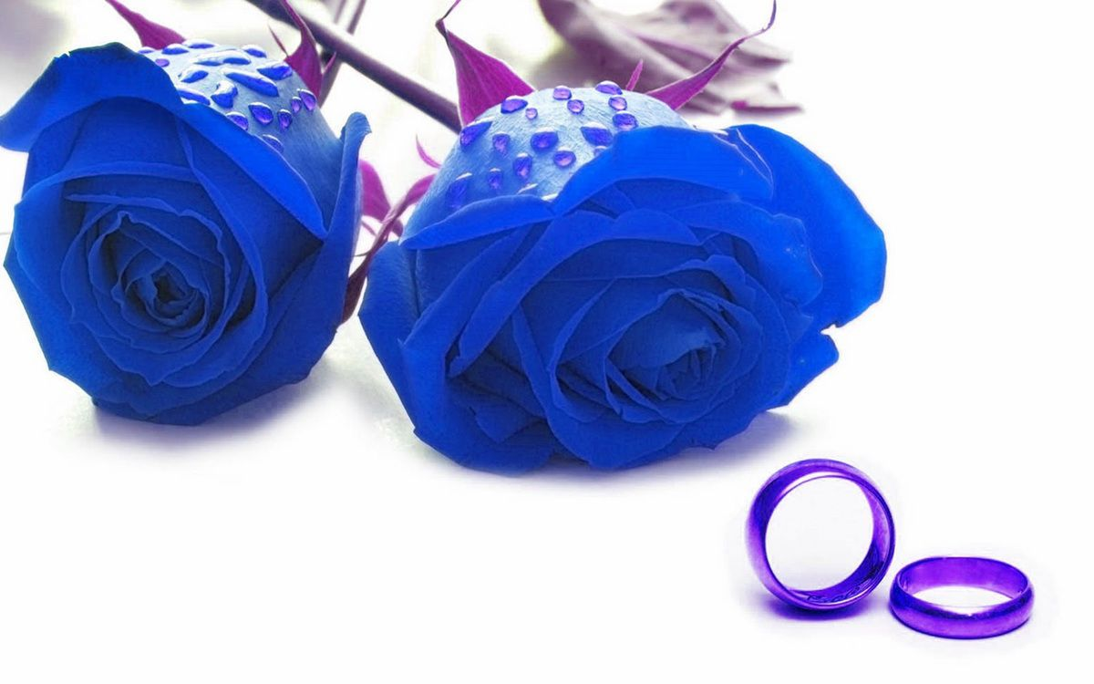 Blue Roses On The Valentine Day