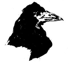 Les corbeaux: oiseaux de mauvaises augures