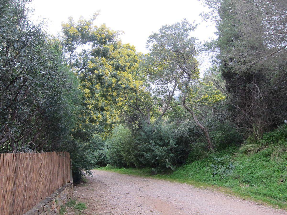 Boucle Le Rayol Caravalaire par le haut dattier et la chemin du littoral par Bonporteau