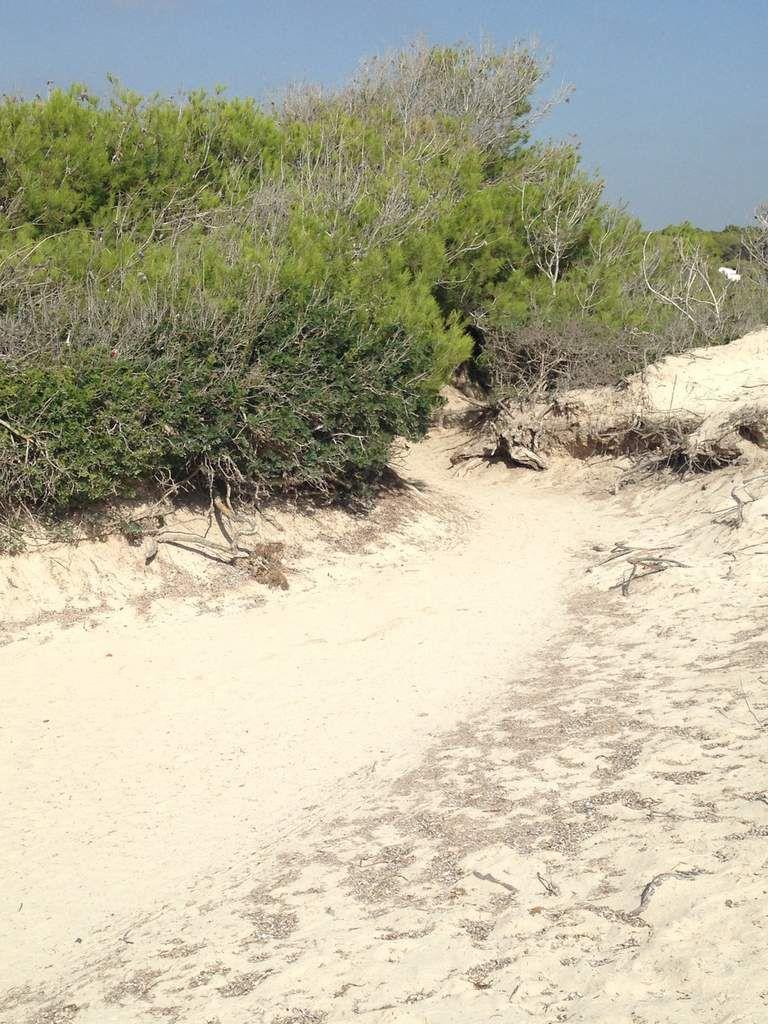 La plage d'Es Trenc