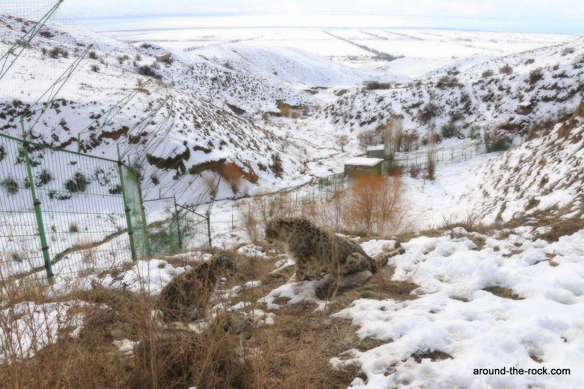 Centre de réhabilitation des léopards des neige NABU