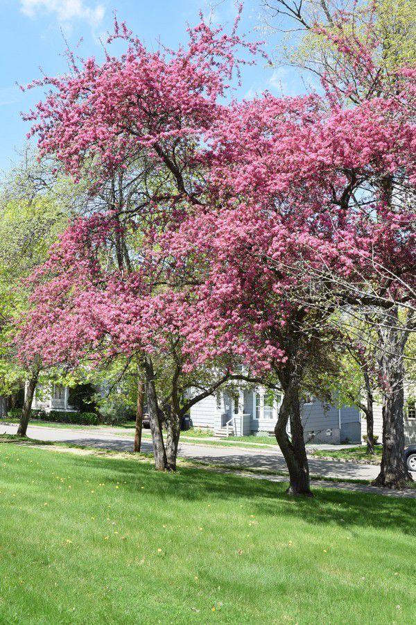 Le printemps dans le Nord des Etats-Unis