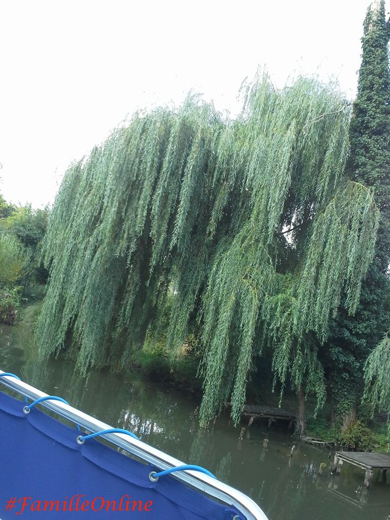 Désolé pour cette photo... j'ai toujours été passionné par ces magnifiques arbres que sont les saules pleureurs !