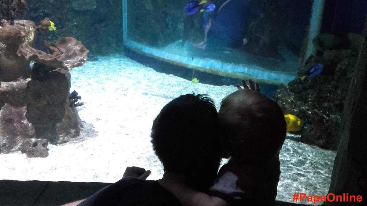 Du haut de ses 17 mois, Lucien aussi a été fasciné par tous ces jolis poissons !