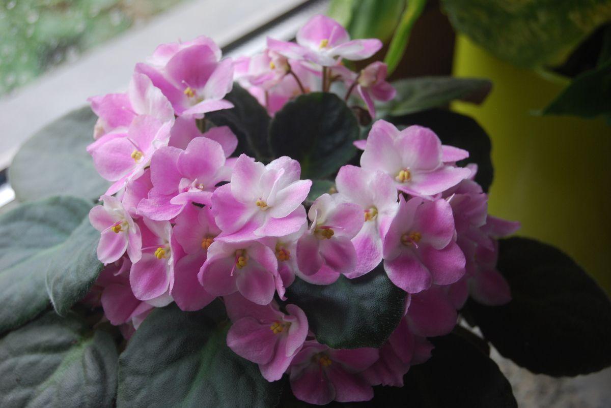 En fleurs......!!!