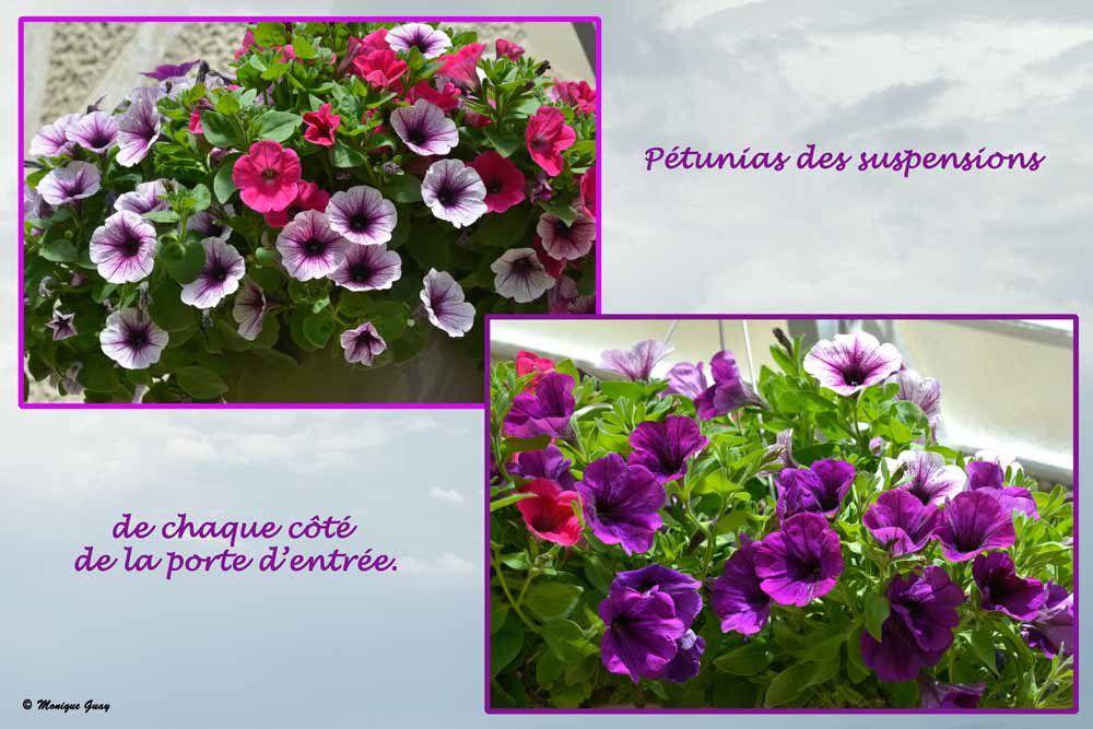 Fleurs de notre gîte: panel