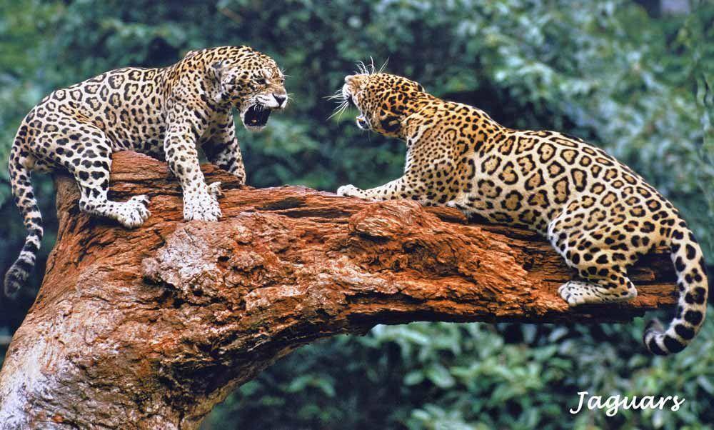 Comme j'aimerais être à la place de ces photographes animaliers !