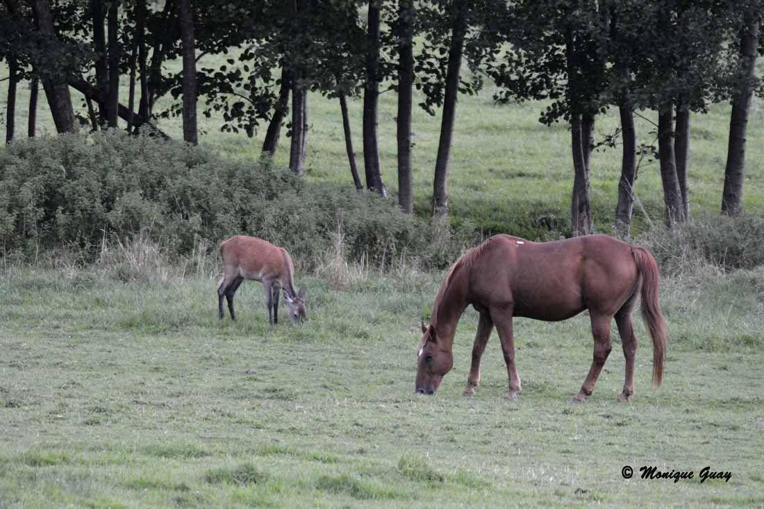 D'autres magnifiques chevaux sont dans cette pâture.