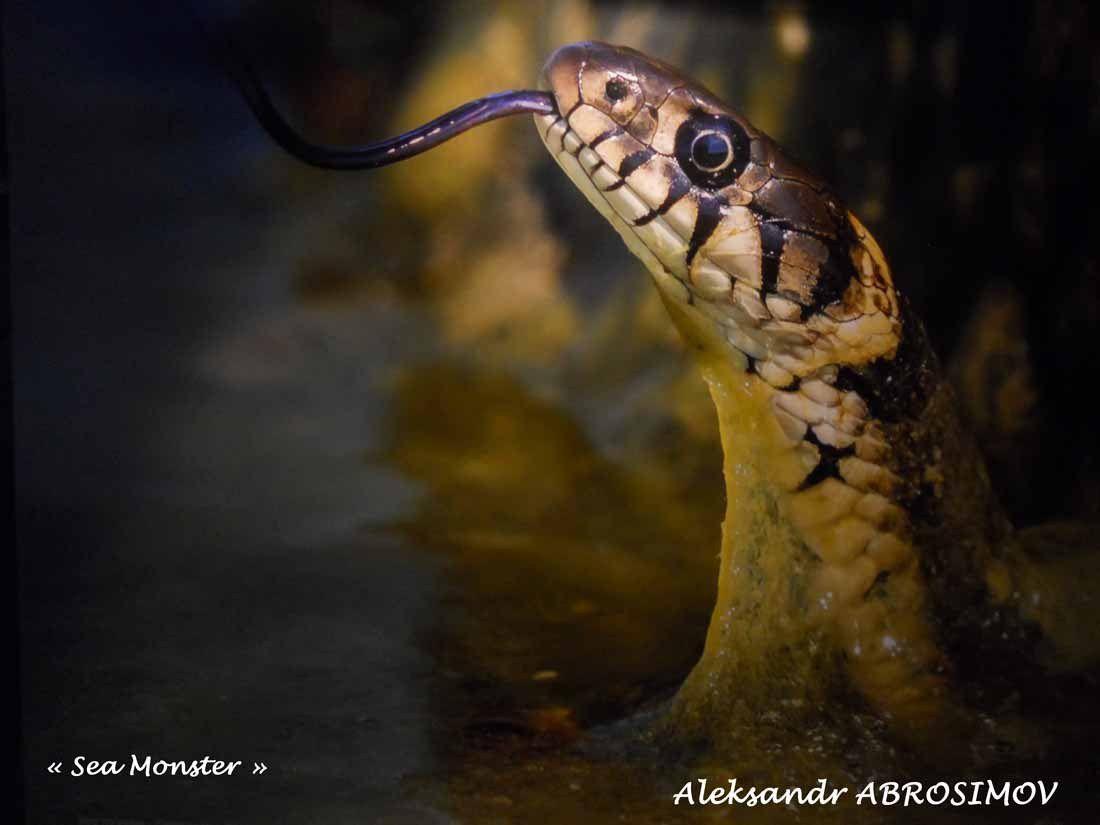 """Sea Monster"" par Aleksandr ABROSIMOV."