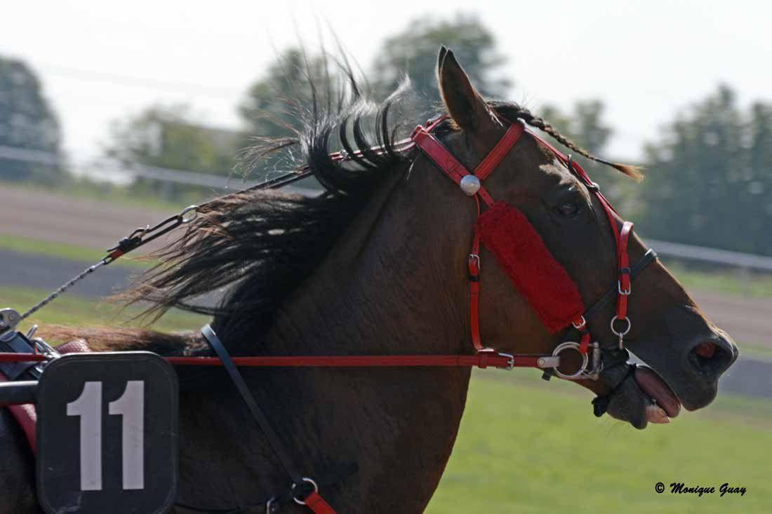 La Capelle (02): zoom sur les chevaux de course