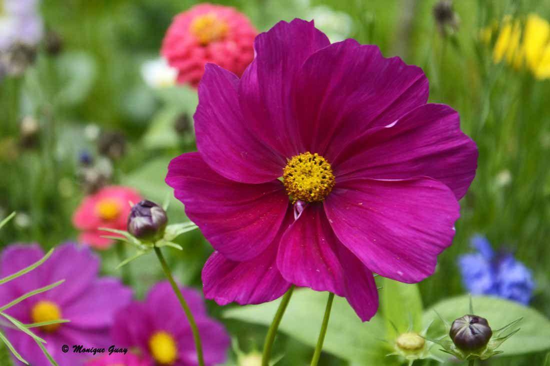 Des fleurs pour vous: 5 gros plans