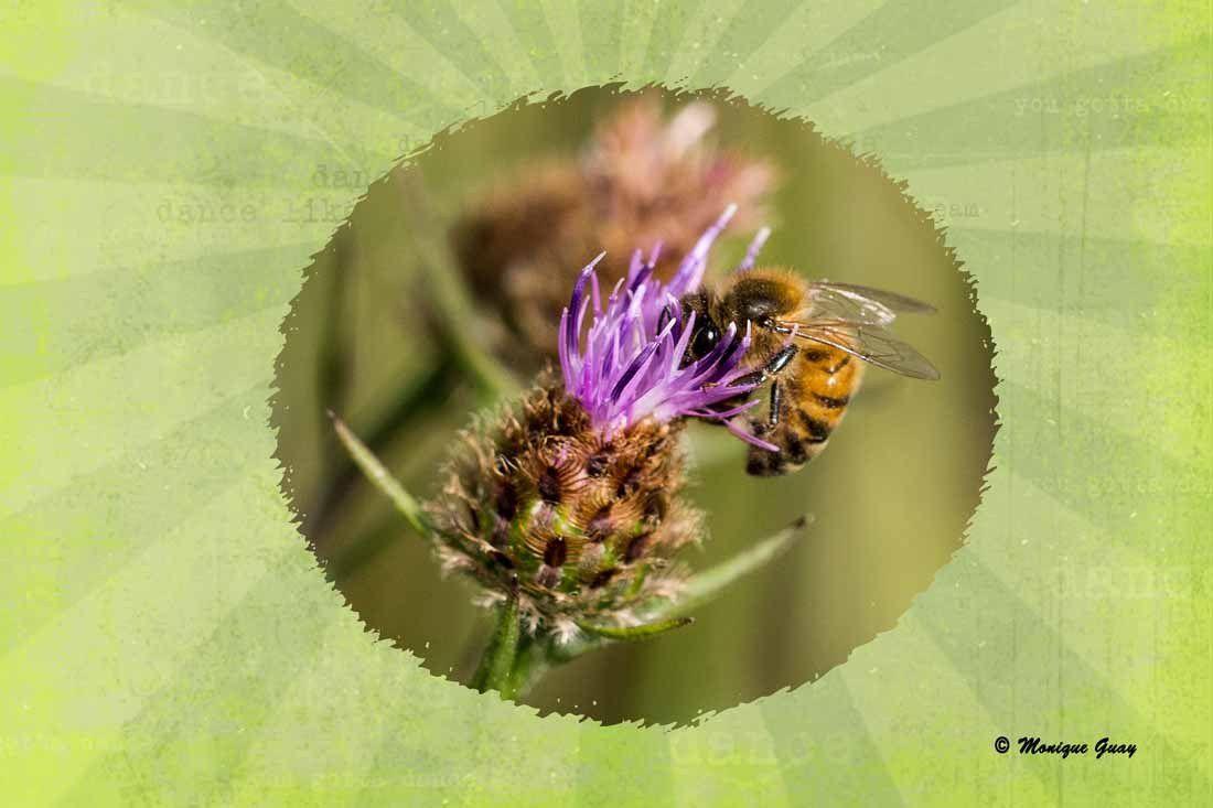 Festin d'abeille