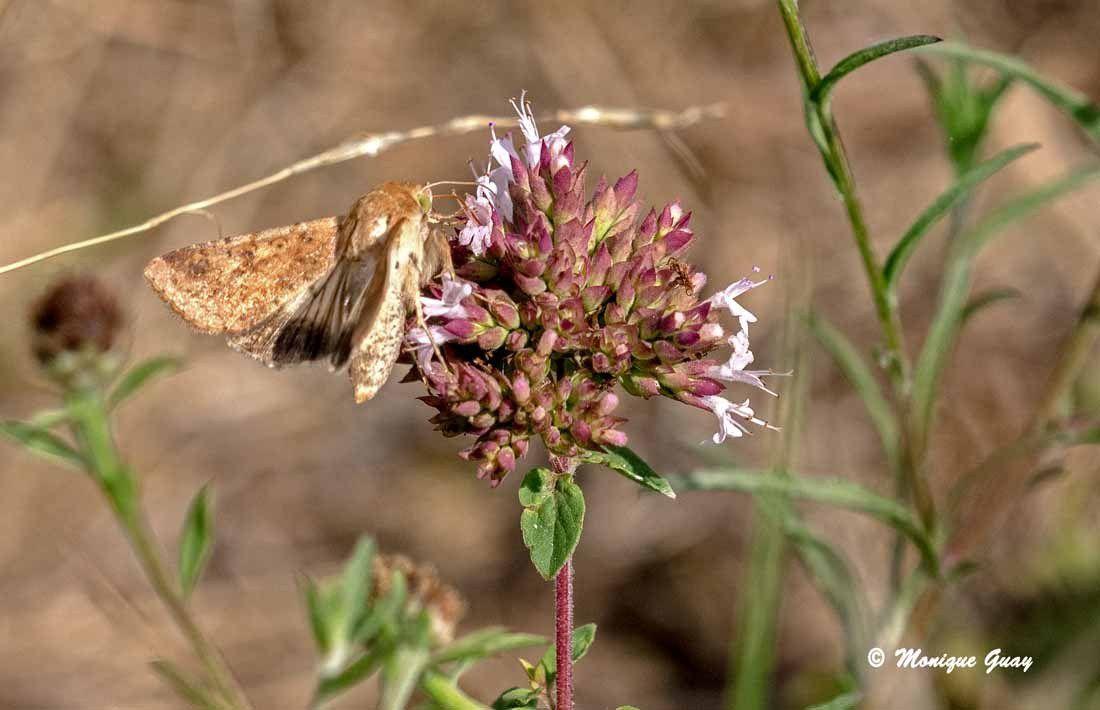 Insectes macros les yeux de ma vie - Duree de vie papillon de nuit ...