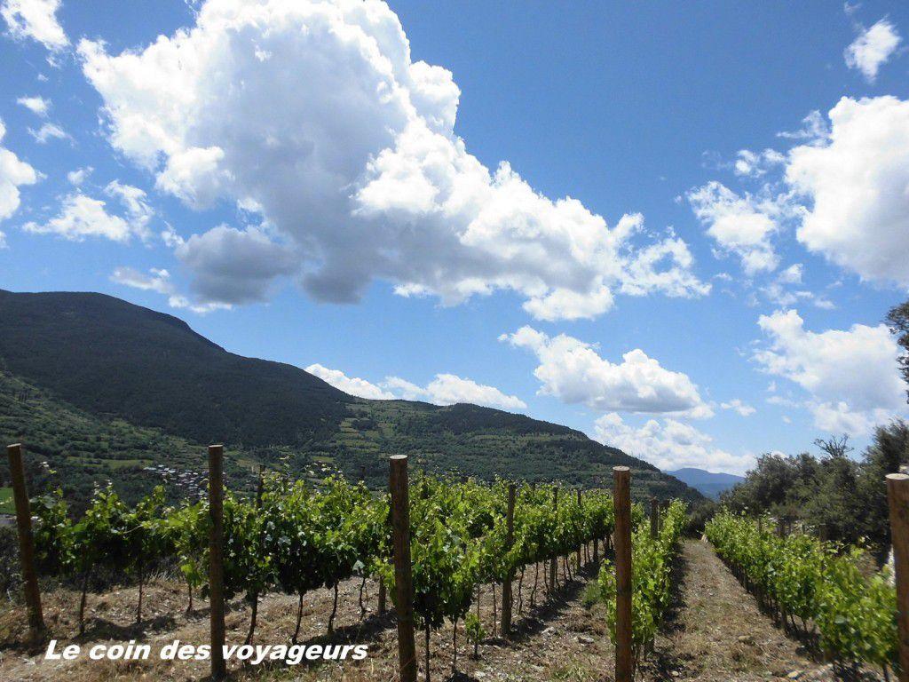 Andorre- Vignes