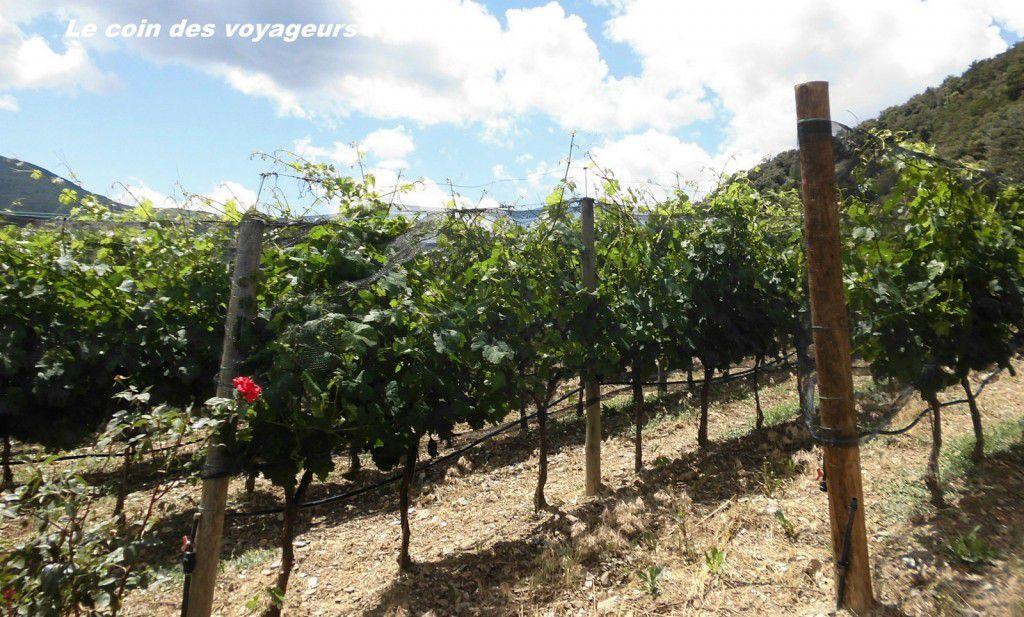 Andorre Vignoble d'altitude