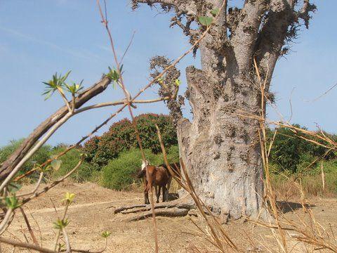 Une guesthouse familiale à Nianing au Sénégal