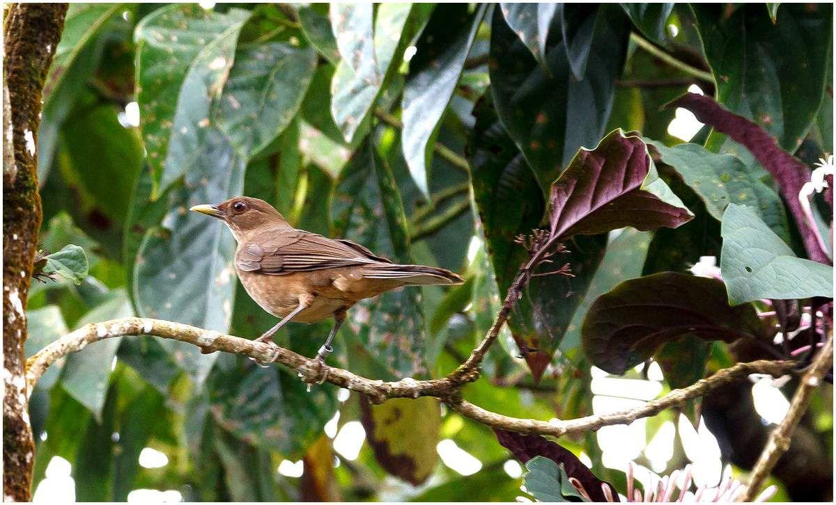 Costa Rica - La faune de Tortugero