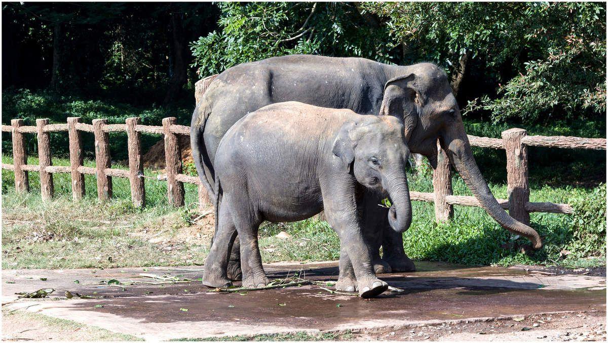 Sri Lanka - Vie sauvage