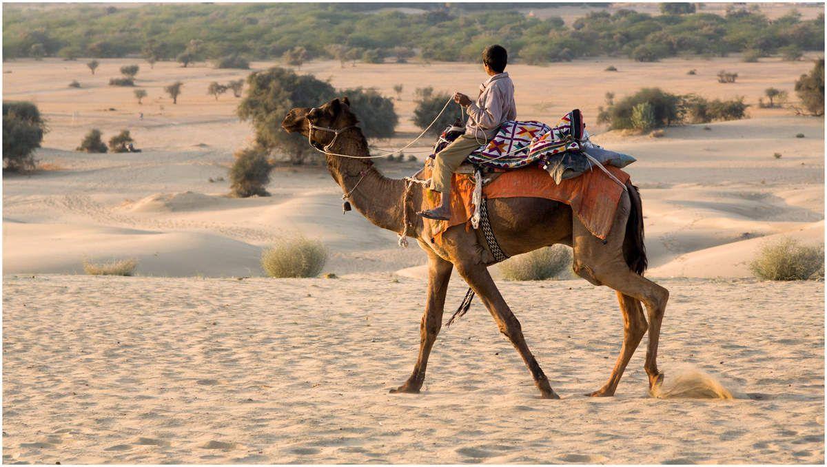 Le désert du Thar