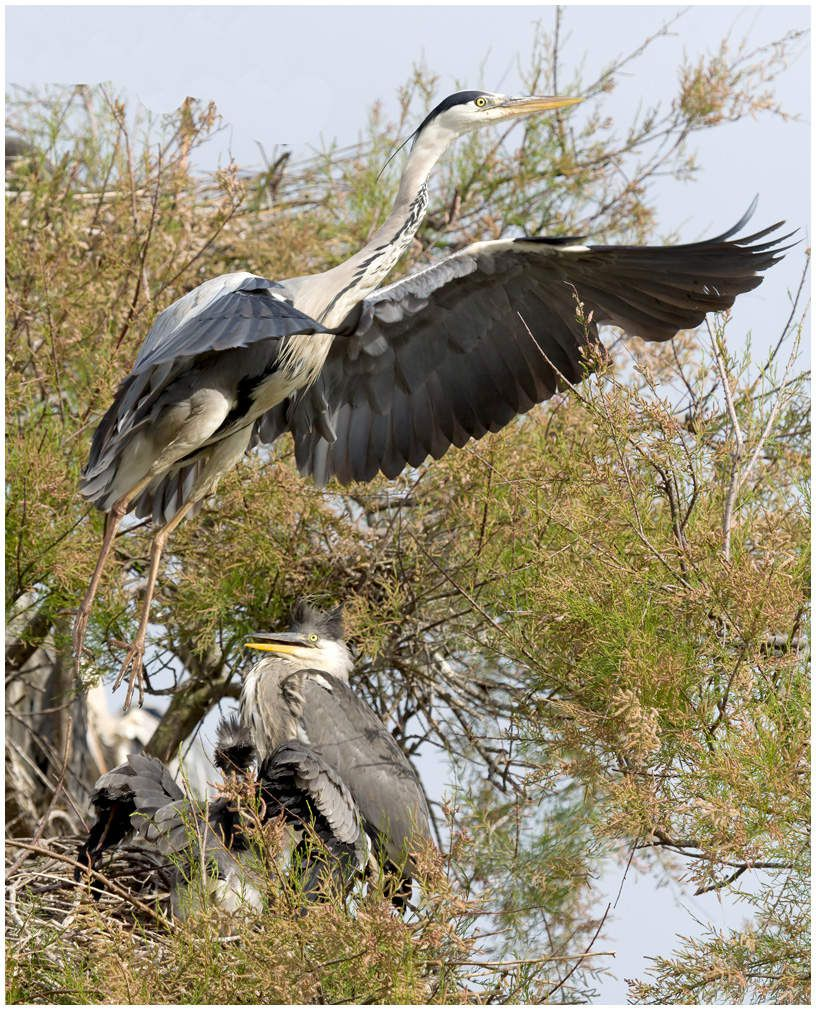 Les oiseaux du parc de Pont de Gau