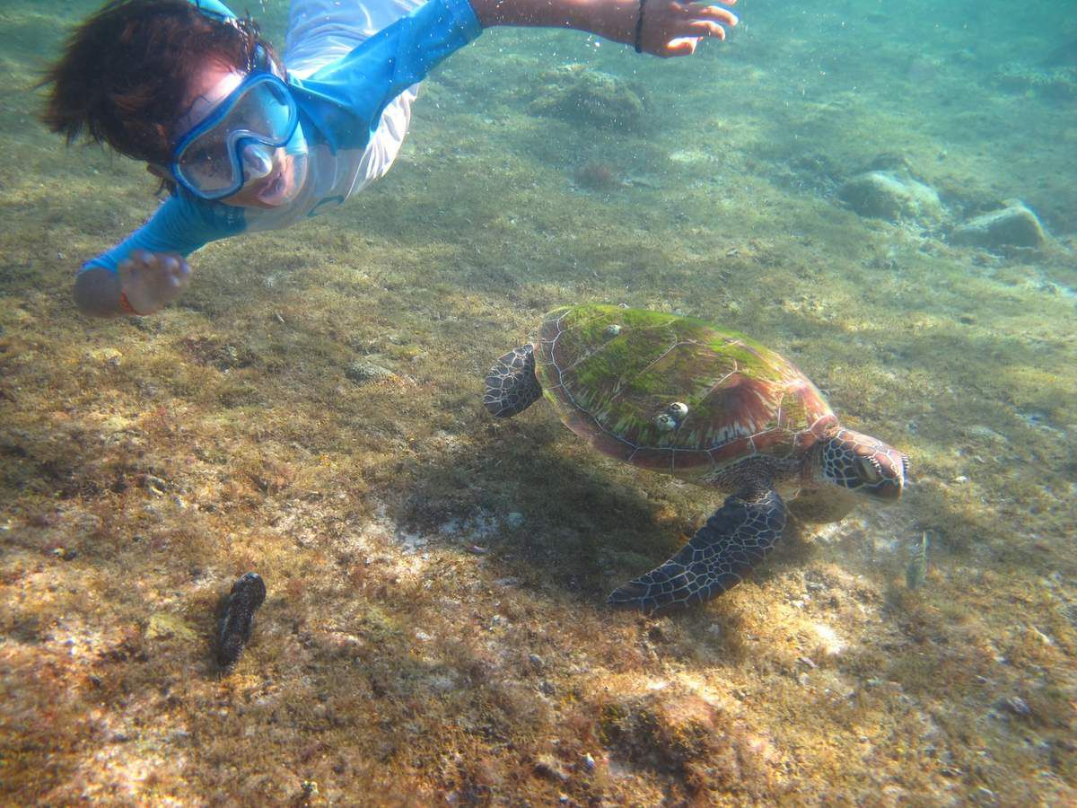 Apo Island, suite d'un moment cool