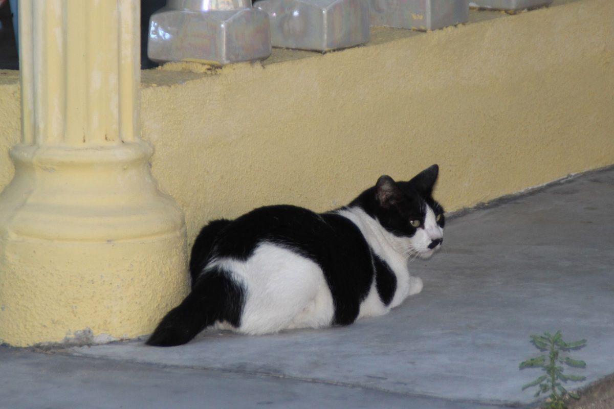 celui-là, c'est Adolf le chat du resto...