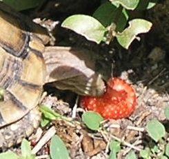 Lutinou et tortue en rafale...