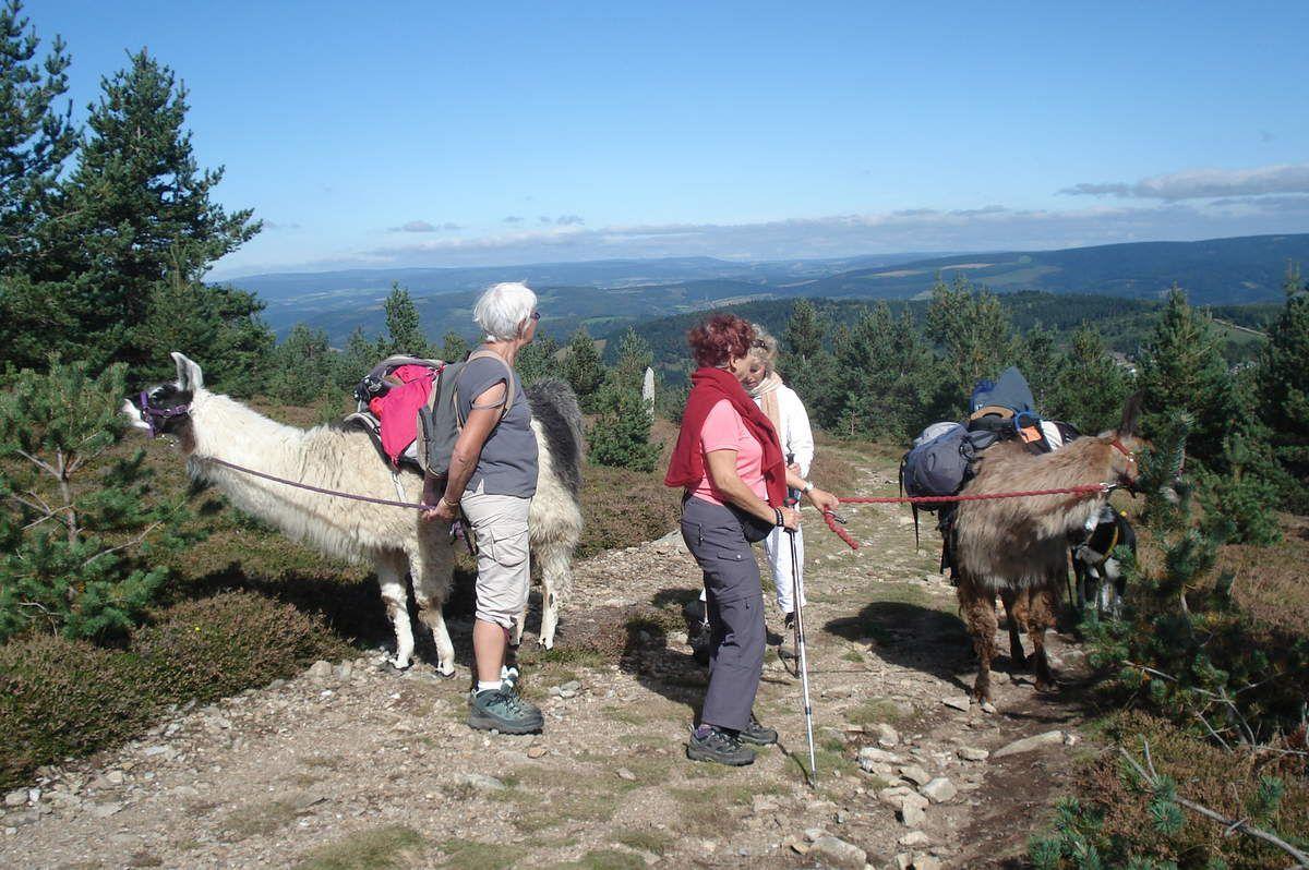 Pause gourmande dans la montée au Mont Lozère