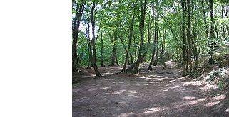 La forêt de Paimpont, lieu présumé de Brocéliande