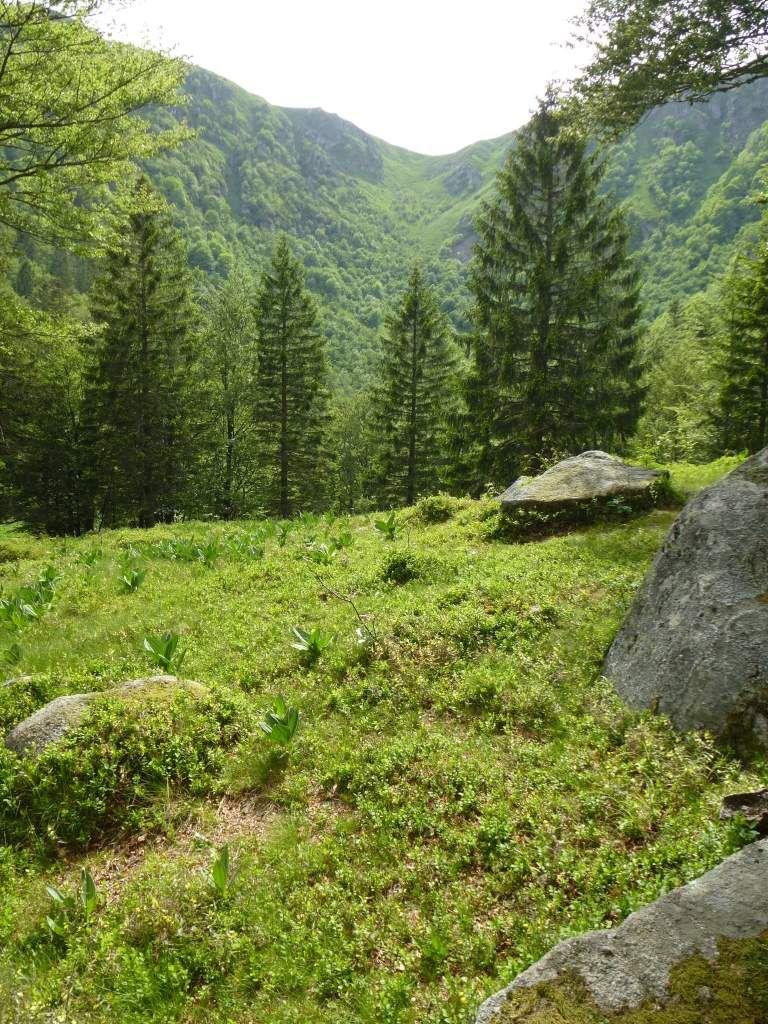 Un endroit de rêve, afin de s'isoler, se recueillir et méditer ...