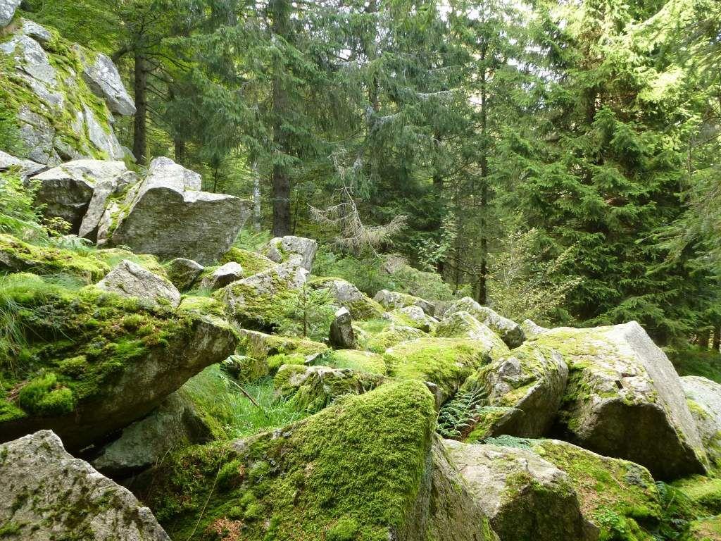 Au milieu d'une sauvage forêt résineuse, je tombe sur ces étranges éboulis granitiques ...