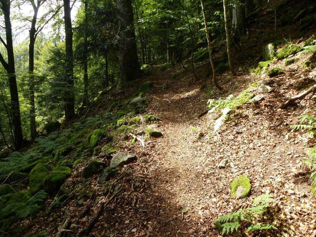 Le sentier du triangle bleu, descendant vers le sentier des roches de Montabey.