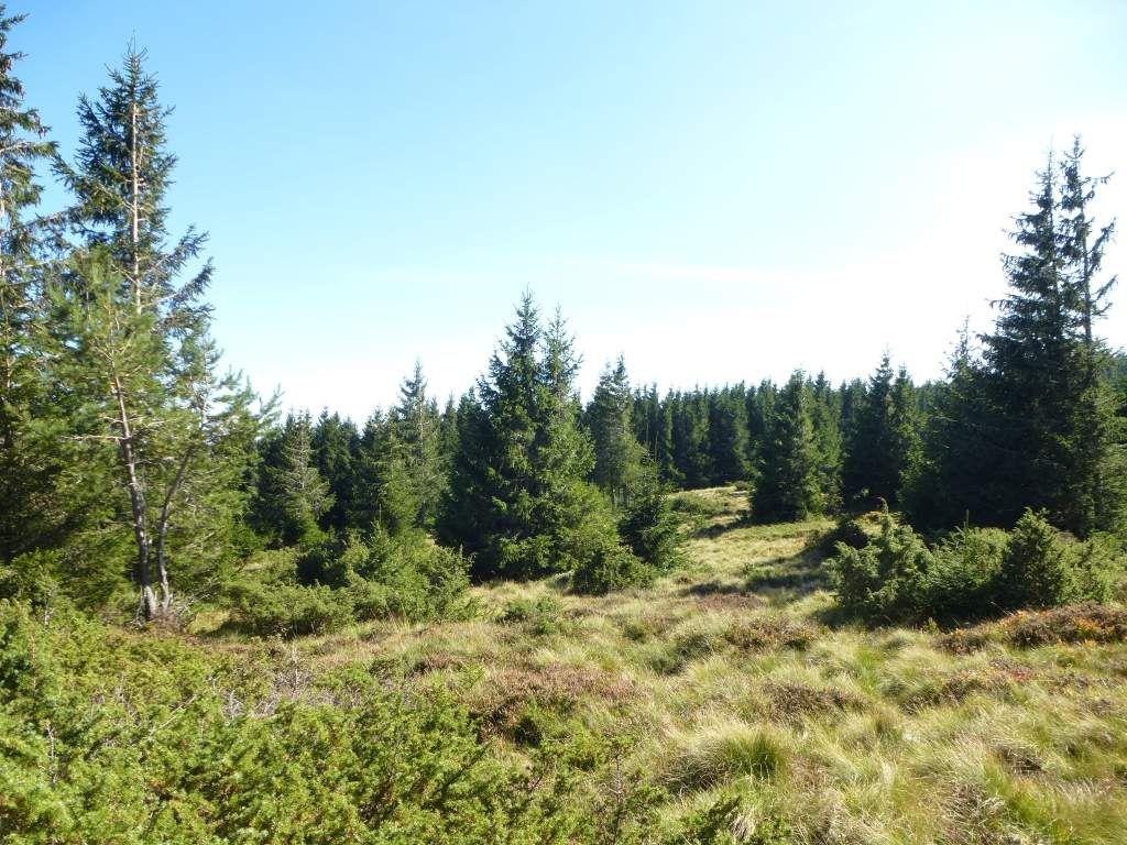 Défilé photographique : à l'assaut de la réserve biologique intégrale du Langenfeldkopf.