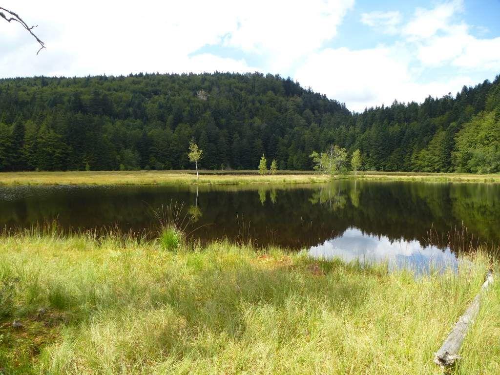 L'étang de Lispach possède un vaste radeau flottant (attention : accès très périlleux ! ).