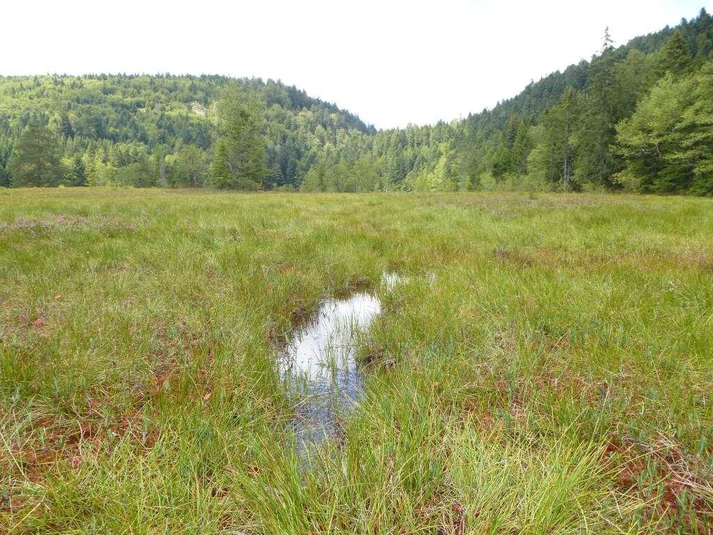 Les trous d'eau sont certes peu nombreux à Lispach, mais ils se révèlent redoutables ...