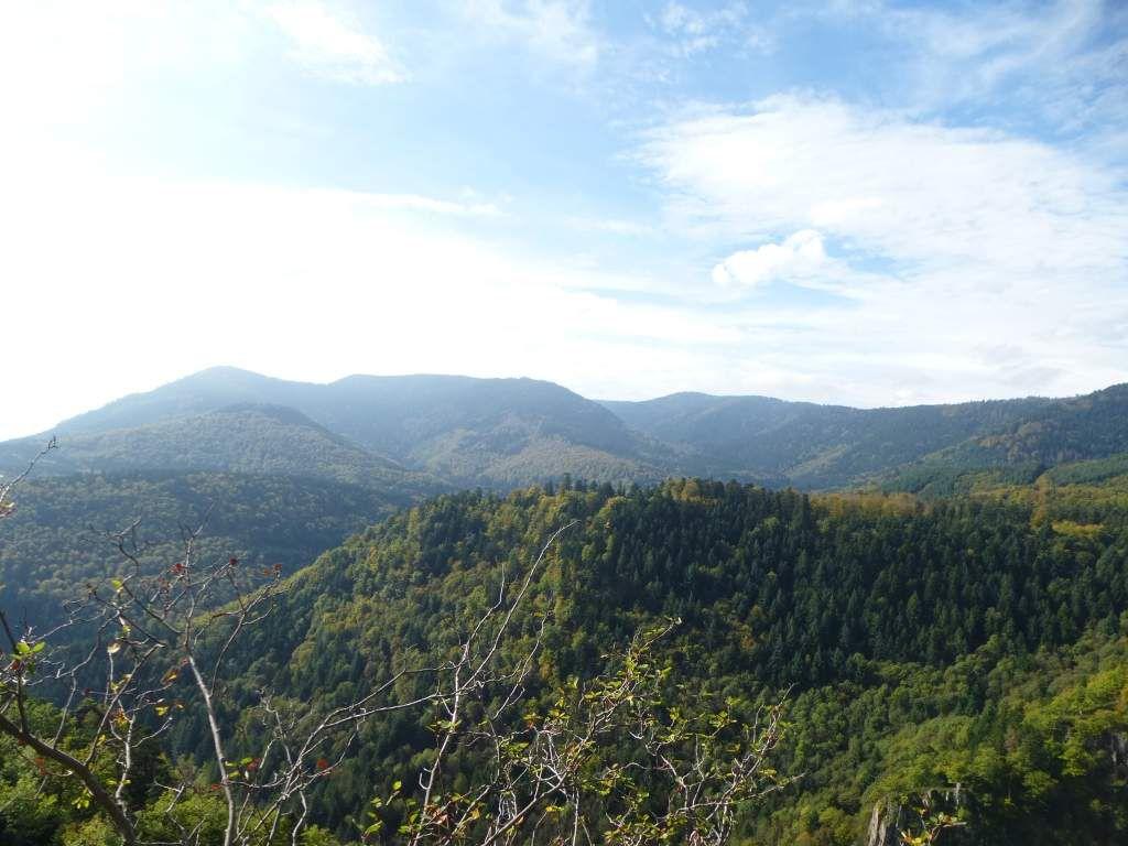 Vue sauvage, vers le Grossmann (986 m) et le Rocher de Mutzig (1010 m).